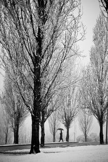 Winter walk by carlos sanchez pereyra