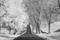 Infrared-landscape-street-with-bare-trees-on-one-side-and-leaves-on-the-other-m-kloth-mg-1920