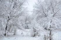 Winter park von Alexandr Verba