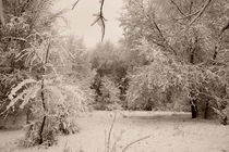 Winter park 3 von Alexandr Verba