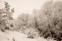 Winter park 5 von Alexandr Verba