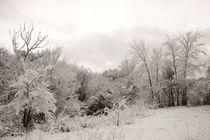 Winter park 6 von Alexandr Verba