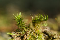Moss on a trunk by Andreas Müller