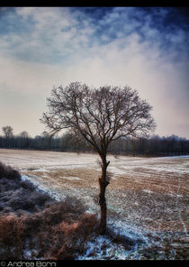Winter tree by and979