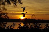 Sunset  by peschewa