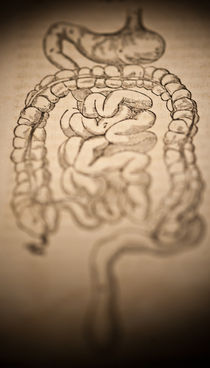 Intestines von Mark Strozier