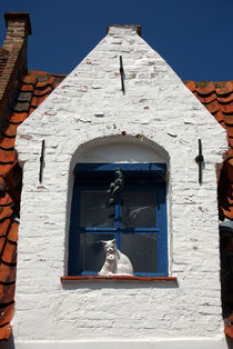 White cat at blue window by RicardMN Photography