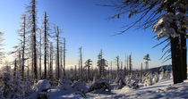 Winterpanorama am Brocken 10 by Karina Baumgart