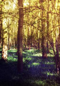 Bluebell Wood von Sybille Sterk
