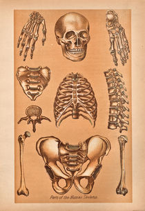 Parts-of-the-human-skeleton
