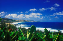 Bathsheba, Barbados by Melissa Salter
