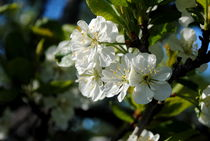 der Frühling ist da by tinadefortunata