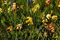 Frühlingswiese von tinadefortunata