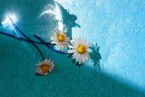 Gänseblümchen von tinadefortunata