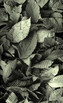 Beech Leaves by David Halperin