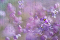 Blütentanz by Ursula Pechloff