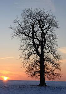 Sonnenuntergang an einer Eiche by Wolfgang Dufner