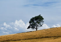 Lonely tree by janna-bantan