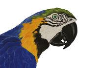 Papagei-freigestellt