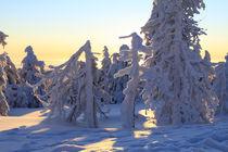 Winterlandschaft am Brocken im Harz 26 by Karina Baumgart