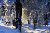 Winterlandschaft am Brocken im Harz 29 by Karina Baumgart