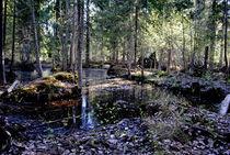 Sumpflandschaft by tinadefortunata