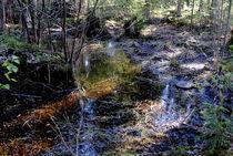 märchenhaftes Moor von tinadefortunata