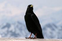 Vogel von Jens Berger