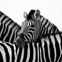 Zebrato by Nina Papiorek