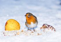Robin in Snow by Graham Prentice