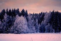 märchenhafter Wald by tinadefortunata