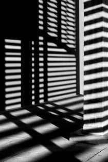 Zebra by Jaromir Hron