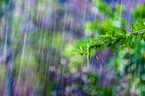 'crazy rain' by Victor Bezrukov