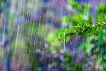 Crazy-rain