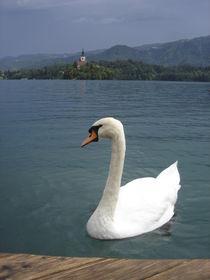 swan lake by Milena Zindovic