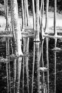 'Snow covered tree trunks with reflections in water' von kbhsphoto