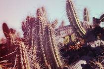 Desert flora by Constanza Caiceo