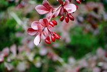 im Herbst by tinadefortunata