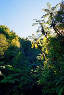 Punga Tree Ferns Forgotten World Highway New Zealand von Kevin W.  Smith