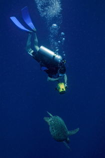 Diver filming Green Sea Turtle (Chelonia mydas) by Sami Sarkis Photography