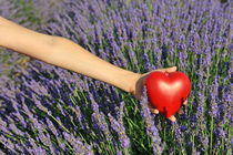 Holding heartshape in lavender field by Sami Sarkis Photography