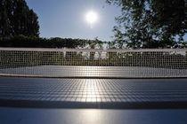 Table Tennis Net in garden by Sami Sarkis Photography