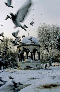 Pigeons flying near a fountain under the snow von Sami Sarkis Photography