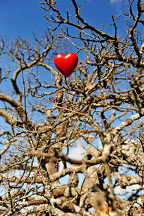 Heart shape hung on dead tree branches by Sami Sarkis Photography