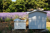 Two beehives by a lavender field von Sami Sarkis Photography