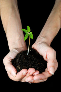 Woman's hands holding seedling by Sami Sarkis Photography