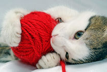 Kitten playing with red ball of yarn von Sami Sarkis Photography