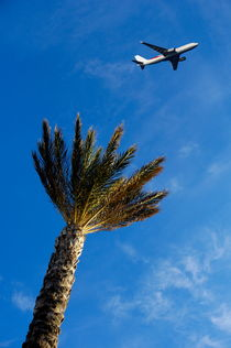 Palm tree with aeroplane flying in background by Sami Sarkis Photography