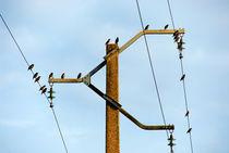 Birds on power line by Sami Sarkis Photography