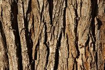 Bark of a pine tree by Sami Sarkis Photography